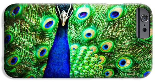 Fauna iPhone Cases - Pageantry Of Colors iPhone Case by Daniel Chen
