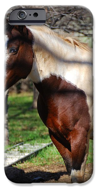 Overo iPhone Cases - Paint Mare iPhone Case by Thea Wolff