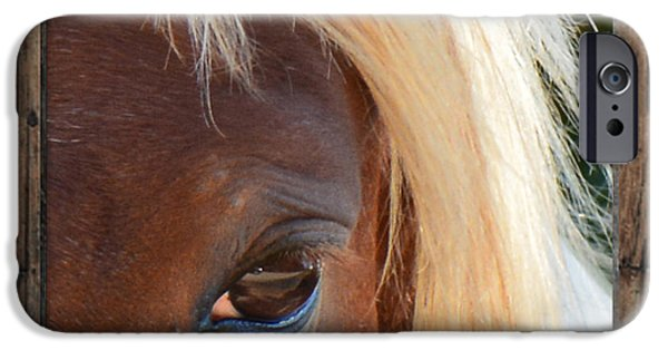 American Saddlebred Art iPhone Cases - Blonde Beauty  iPhone Case by Barbara Dalton
