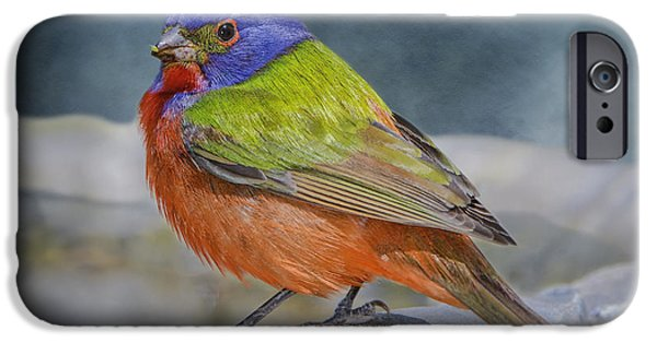 Bunting iPhone Cases - Painted Bunting in April iPhone Case by Bonnie Barry