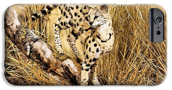 Cheetah Digital Art iPhone Cases - Painted Cheetah iPhone Case by Kristin Elmquist