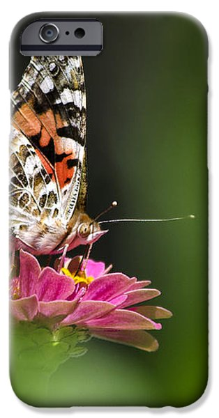Painted Lady Butterfly At Rest iPhone Case by Christina Rollo