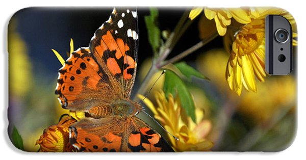 Fury iPhone Cases - Painted Lady  iPhone Case by Eric Rundle