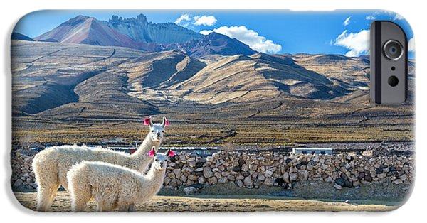 Llama iPhone Cases - Pair of Llamas iPhone Case by Jess Kraft