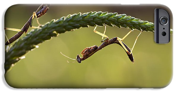 Mantises iPhone Cases - Pair of Praying Mantis Insects iPhone Case by Brandon Alms