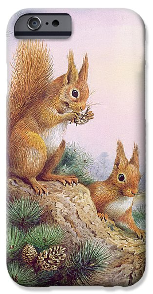 Pine Cones Photographs iPhone Cases - Pair Of Red Squirrels On A Scottish Pine iPhone Case by Carl Donner