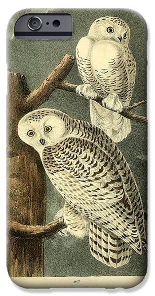 Business Drawings iPhone Cases - Pair of Snowy Owls iPhone Case by John James Audubon