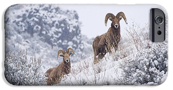 Storm iPhone Cases - Pair of Winter Rams iPhone Case by Mike  Dawson