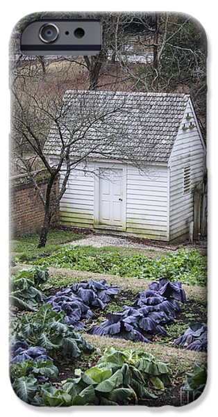 Historic Triangle iPhone Cases - Palace Kitchen Winter Garden iPhone Case by Teresa Mucha