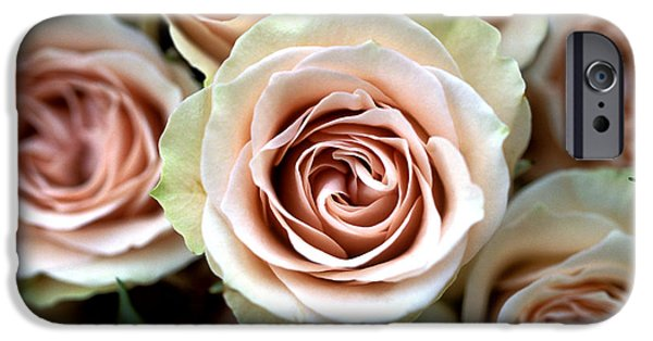Floral Photographs iPhone Cases - Pale Pink Roses iPhone Case by Kathy Yates