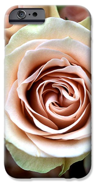Pale Pink Roses iPhone Case by Kathy Yates