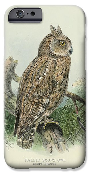 Colored Owls iPhone Cases - Pallid Scops Owl iPhone Case by J G Keulemans