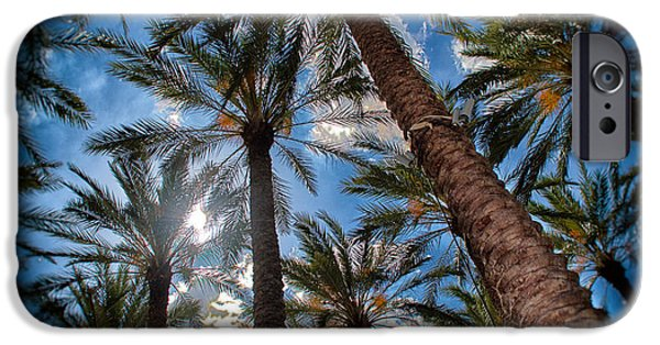 Tropics Pyrography iPhone Cases - Palm Forest  iPhone Case by Shawn Bussey