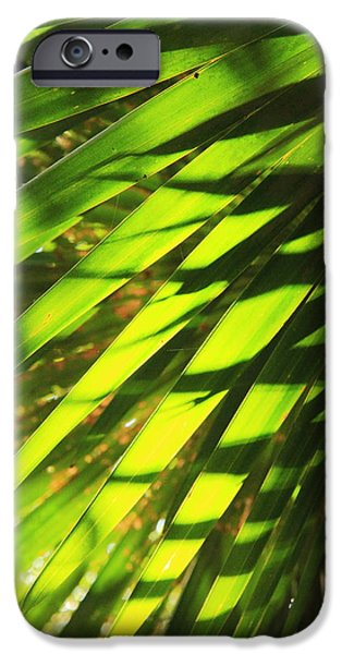United iPhone Cases - Palm Fronds in sunlight and shadow iPhone Case by Roupen  Baker