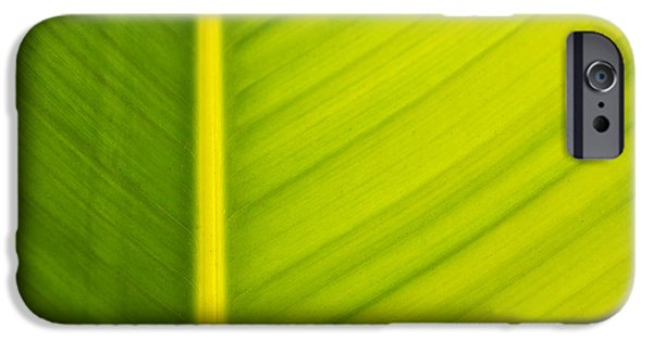 Flora iPhone Cases - Palm leaf macro abstract iPhone Case by Adam Romanowicz
