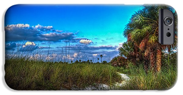 Palmettos iPhone Cases - Palm Trail iPhone Case by Marvin Spates