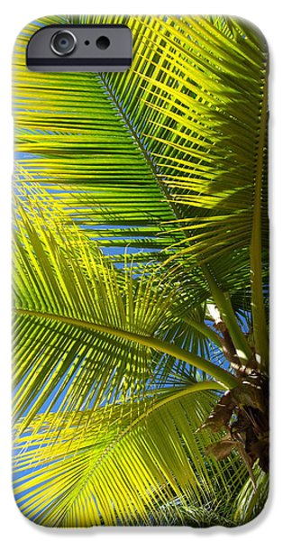 Escape Pastels iPhone Cases - Palm Tree 2 iPhone Case by Prashant Shah