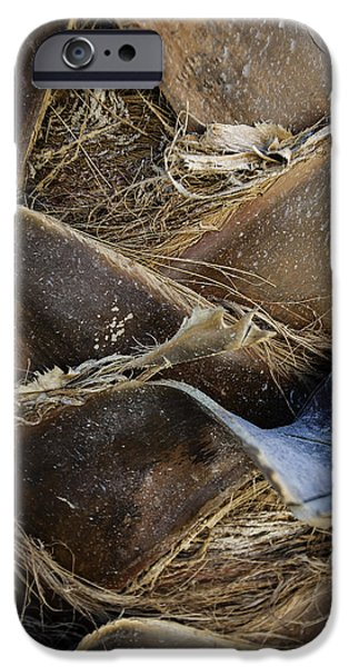 Dry iPhone Cases - Palm Tree Bark iPhone Case by Sebastian Musial