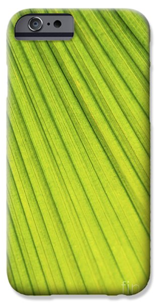 Diagonal iPhone Cases - Palm tree leaf abstract iPhone Case by Elena Elisseeva
