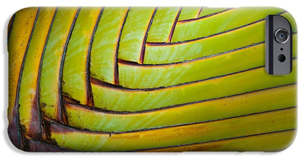Texture Photographs iPhone Cases - Palm Tree Leafs iPhone Case by Sebastian Musial
