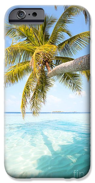 Landscape Poster Photographs iPhone Cases - Palm tree leaning over water - Maldives iPhone Case by Matteo Colombo