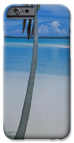 Tall Trees iPhone Cases - Palm Tree On The Beach, One Foot iPhone Case by Panoramic Images