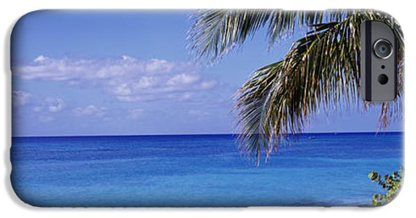 Exoticism iPhone Cases - Palm Tree On The Beach, Seven Mile iPhone Case by Panoramic Images