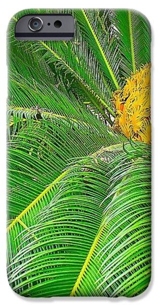Palm tree with blossom iPhone Case by Dragomir Nikolov