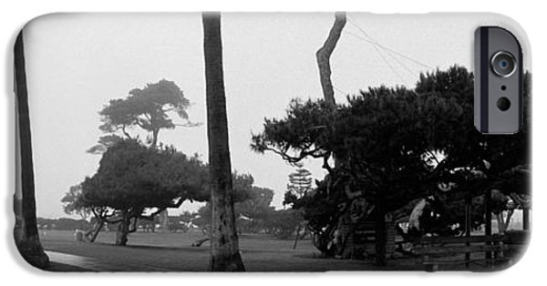 Eerie iPhone Cases - Palm Trees And Fog, San Diego iPhone Case by Panoramic Images