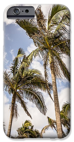 Outdoors iPhone Cases - Palm Trees High Resolution Photo iPhone Case by Paul Velgos