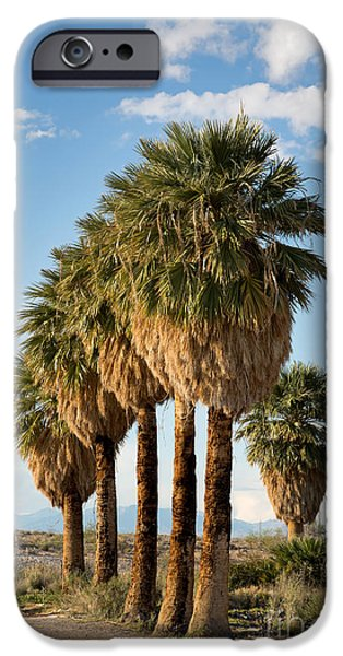 Palm trees iPhone Case by Jane Rix