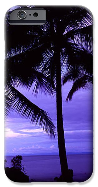 Climate iPhone Cases - Palm Trees On The Coast, Colombia iPhone Case by Panoramic Images