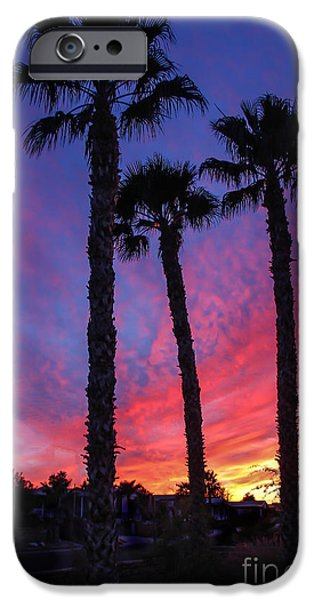Palm Trees Sunset iPhone Case by Robert Bales