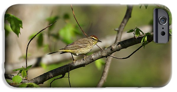 Warbler iPhone Cases - Palm Warbler iPhone Case by Sandy Keeton