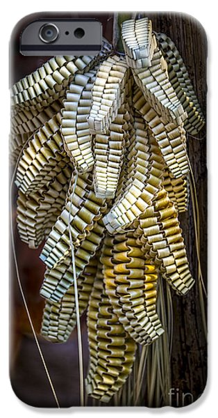 Palmettos iPhone Cases - Palmetto Weave iPhone Case by Marvin Spates
