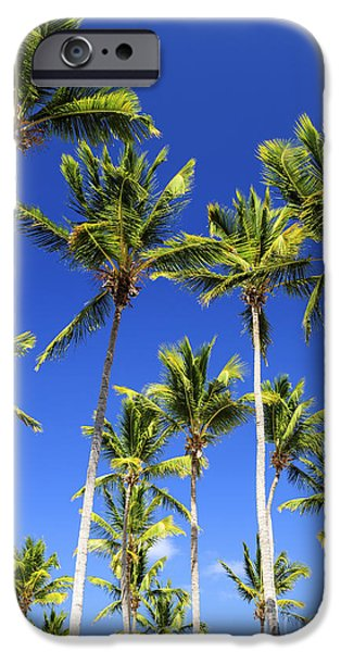 Escape iPhone Cases - Palms on blue sky iPhone Case by Elena Elisseeva