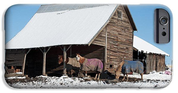 Contour Plowing iPhone Cases - Palouse Horses iPhone Case by Doug Davidson