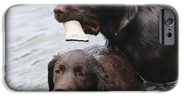 Chocolate Lab iPhone Cases - Pals iPhone Case by Betty Baker