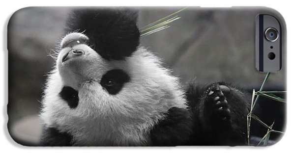 Smithsonian iPhone Cases - Panda Cub at National Zoo iPhone Case by Jack Nevitt