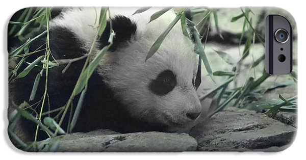 Recently Sold -  - Smithsonian iPhone Cases - Panda Cub Bao Bao iPhone Case by Jack Nevitt