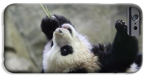 Smithsonian iPhone Cases - Panda Cub iPhone Case by Jack Nevitt