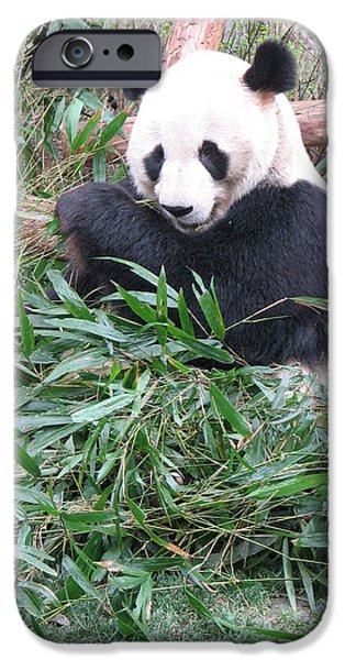 Fund For Animals iPhone Cases - Panda iPhone Case by Marcia Socolik