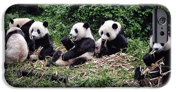 Animals Photographs iPhone Cases - Pandas in China iPhone Case by Joan Carroll
