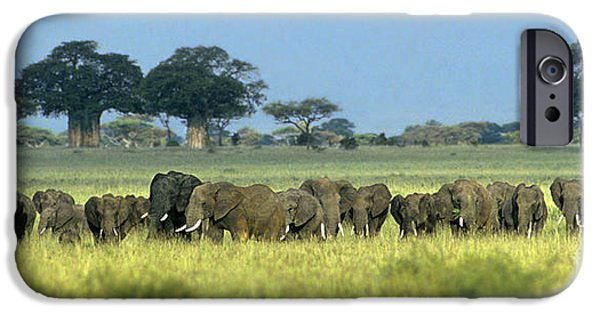 Elephants iPhone Cases - Panorama African Elephant Herd Endangered Species Tanzania iPhone Case by Dave Welling
