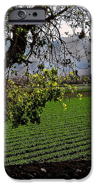 Panoramic of Winter Lettuce iPhone Case by Robert Bales
