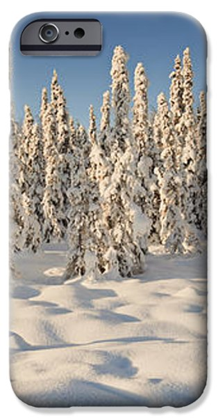 Panoramic View Of Snow-covered Spruce iPhone Case by Ray Bulson