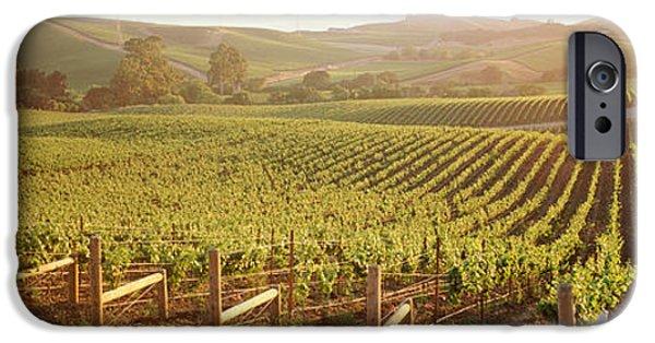 Vineyard In Napa iPhone Cases - Panoramic View Of Vineyards, Carneros iPhone Case by Panoramic Images