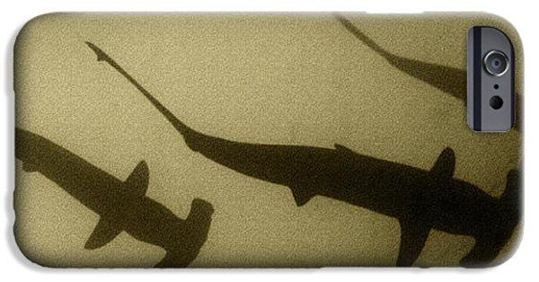 Fauna iPhone Cases - PANOWILD 035 A.Carrera iPhone Case by Alberto Carrera