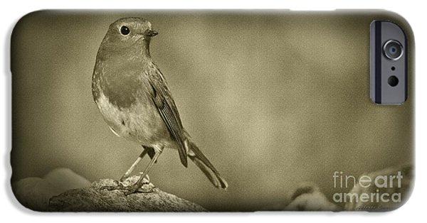 Birds iPhone Cases - PANOWILD 083  A.Carrera iPhone Case by Alberto Carrera