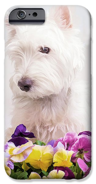 Cute Puppy iPhone Cases - Pansies iPhone Case by Edward Fielding